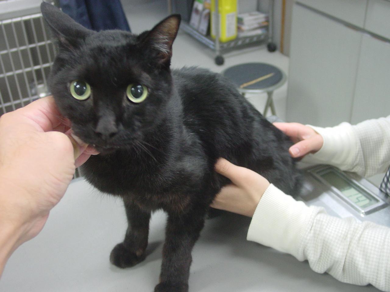 甲状腺 亢進 症 機能 猫
