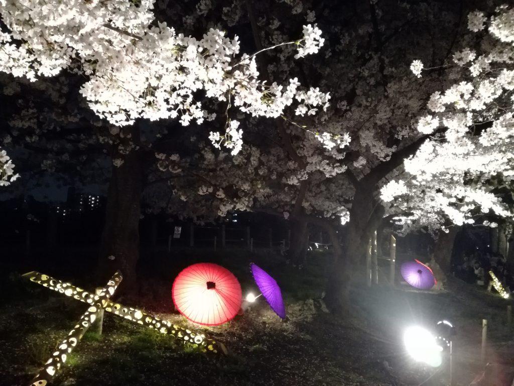 舞鶴公園さくらまつりのライトアップ