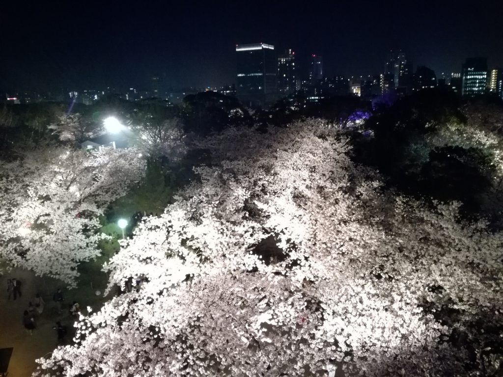 舞鶴公園さくらまつり 天守台からのさくらライトアップと夜景
