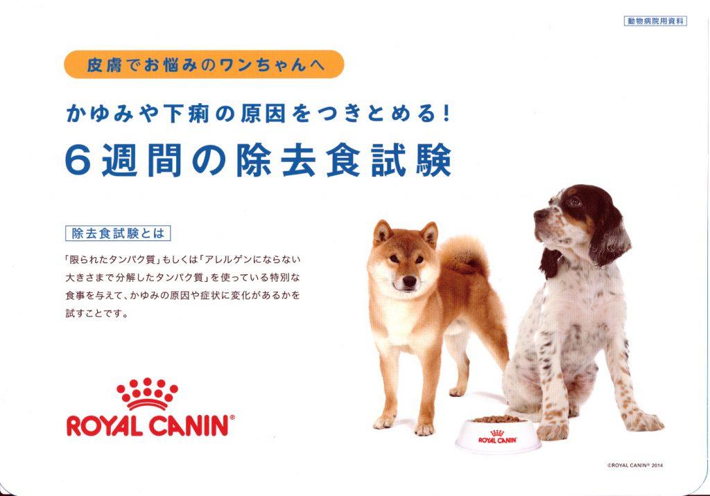 犬の除去食試験