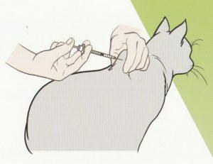 インスリンの注射を行う 猫